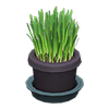 Picture of Cat Grass
